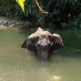 Se anche la morte dell'elefantessa diventa anti-indù