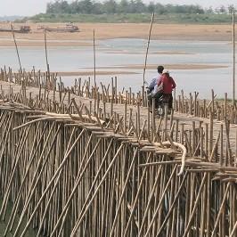 Come canne di bambù