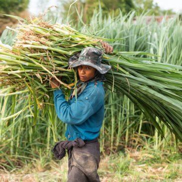 Cambogia: i lavoratori migranti tornano a casa