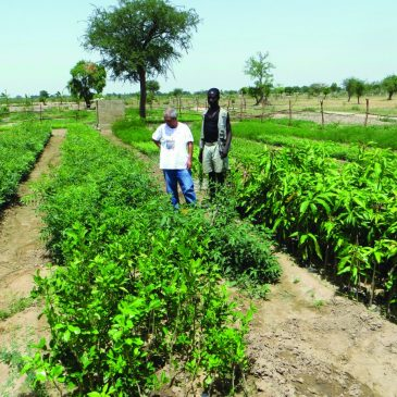 Il missionario agricoltore: in Camerun coltiviamo terra e futuro