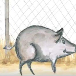 La Peppa Pig australiana? Insegna a leggere ai piccoli aborigeni
