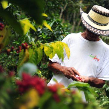 Colombia: economia equosolidale per sostenere la pace