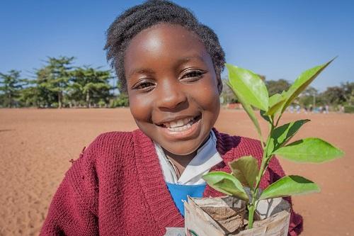 Nello Zambia la Chiesa pianta alberi contro la deforestazione