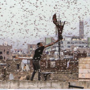 L'invasione delle locuste