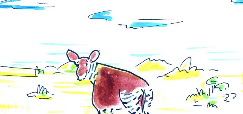 Alla scoperta dell'okapi