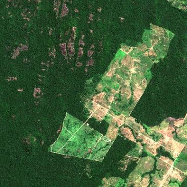 Amazzonia, deforestazione record con la pandemia