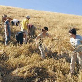 Il Papa scrive alla FAO sugli OGM