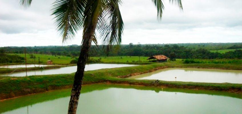 Deforestazione, la lebbra dell'Amazzonia
