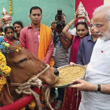 India: omicidi per salvare le mucche