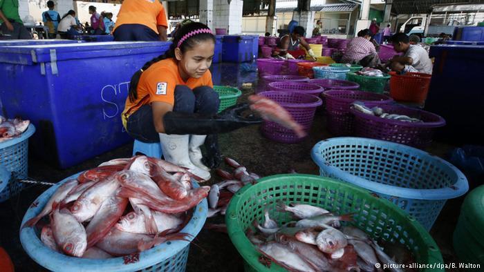 Industria del tonno: è ancora sfruttamento